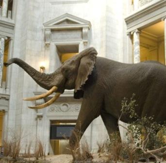 No vieron al elefante